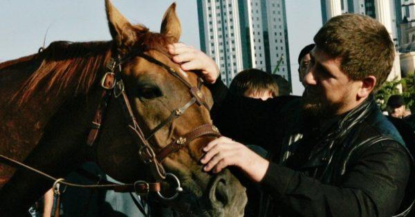 кобылы Кадырова
