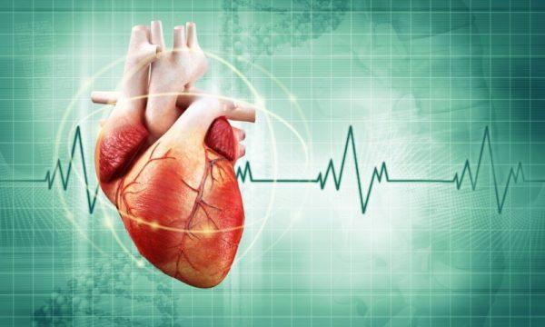 измерять ритм сердцебиения человека