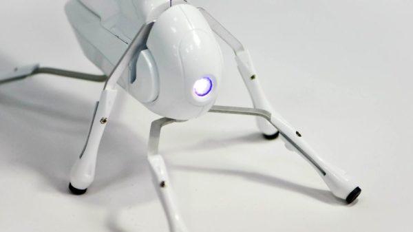 запрограммировать своего робота.