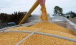 Экспорт украинских зерновых снизился