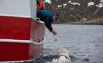 Норвежские рыбаки обнаружили кита с камерой и надписью «оборудование Санкт-Петербурга»